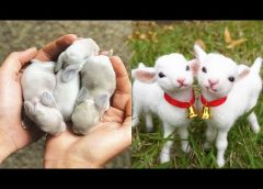 Cutest baby animals Videos Compilation Cute moment of the Animals – Cutest Animals #29